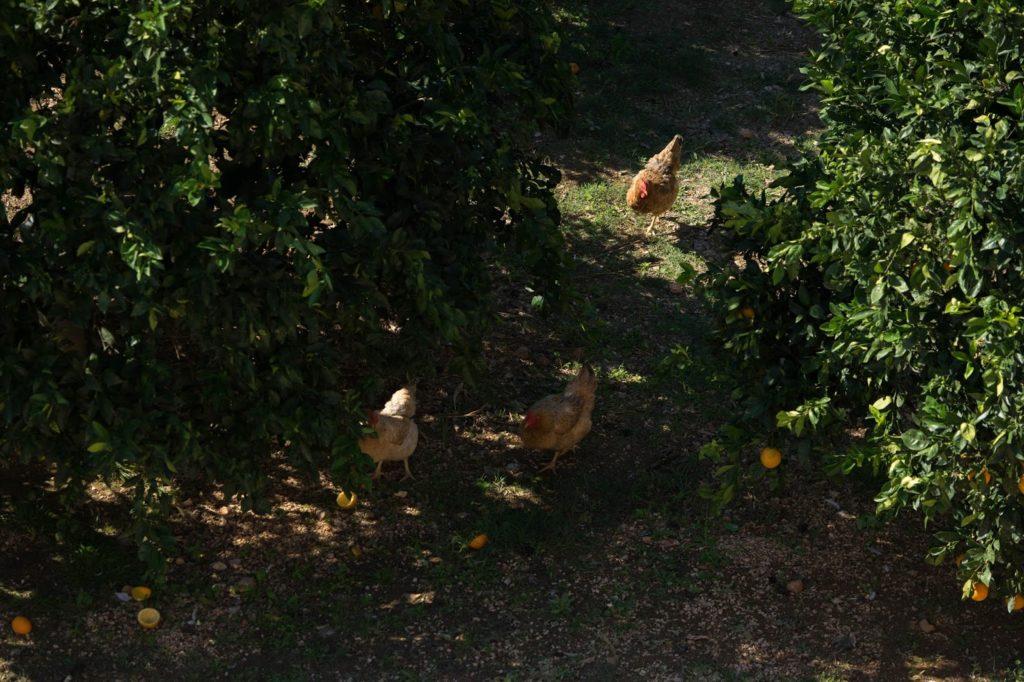 relax in farm